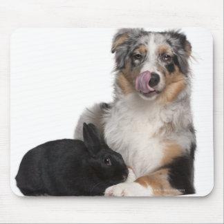 Conejo de 1 año que miente al lado de un austral alfombrillas de ratones