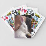Conejo de conejito blanco del sueño baraja