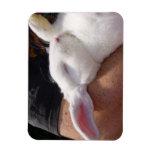 Conejo de conejito blanco del sueño imanes rectangulares