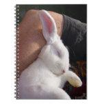 Conejo de conejito blanco del sueño libretas