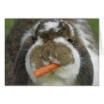 Conejo de conejito divertido de Holanda Lop que co Tarjetas