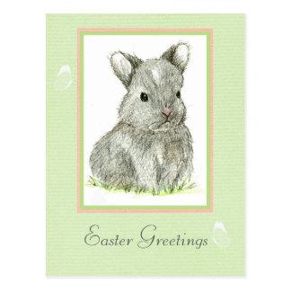 Conejo de conejito gris del bebé de la postal de