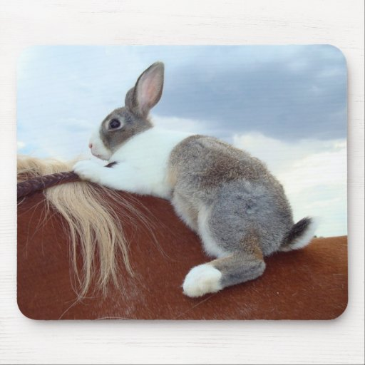 Conejo de conejito holandés que monta un caballo alfombrilla de ratones