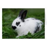 Conejo de conejito inglés del bebé lindo - animale tarjetas