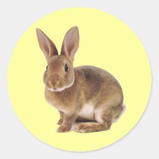 Conejo de conejito lindo de Kawaii Pegatina Redonda