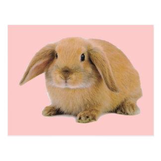 Conejo de conejito lindo de Kawaii Postal