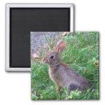 Conejo de conejito lindo del conejo de rabo blanco iman de nevera