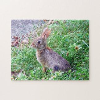 Conejo de conejito lindo del conejo de rabo blanco rompecabezas con fotos