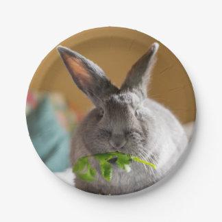 Conejo de conejito lindo que come las placas de platos de papel