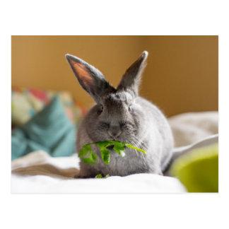 Conejo de conejito lindo que come los Veggies Tarjeta Postal
