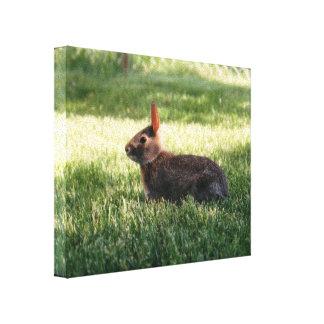 Conejo de conejito lona envuelta para galerías