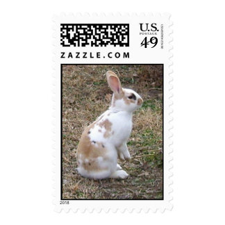 Conejo de conejito manchado franqueo