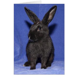 Conejo de conejito negro tarjeta