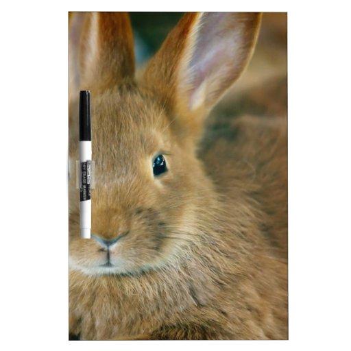 Conejo de conejito pizarra blanca