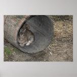 Conejo de conejito poster
