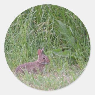Conejo de conejito salvaje del bebé pegatina redonda