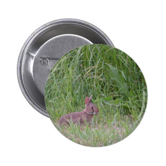 Conejo de conejito salvaje del bebé pin