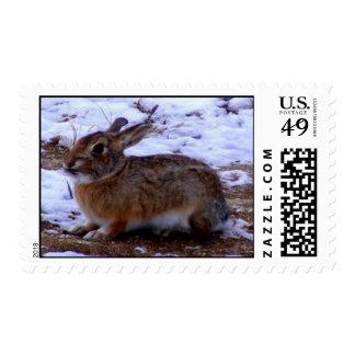 Conejo de conejito salvaje franqueo