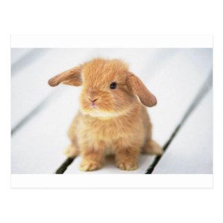 Conejo de conejito tarjetas postales