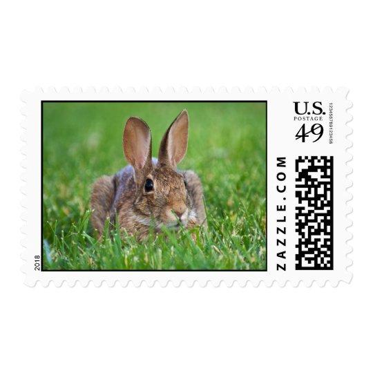 Conejo de conejito timbres postales