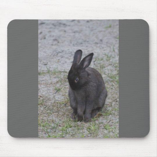 Conejo de conejito tímido alfombrillas de raton