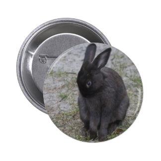 Conejo de conejito tímido pins