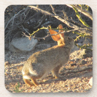 Conejo de conejo de rabo blanco del desierto posavaso