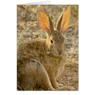Conejo de conejo de rabo blanco del desierto tarjeta de felicitación