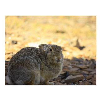 Conejo de conejo de rabo blanco del desierto tarjeta postal