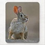 Conejo de conejo de rabo blanco del este tapetes de raton