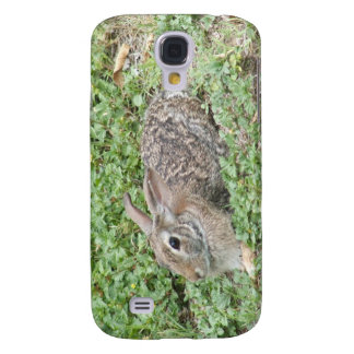 Conejo de conejo de rabo blanco