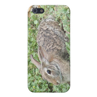 Conejo de conejo de rabo blanco iPhone 5 cárcasas