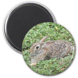 Conejo de conejo de rabo blanco iman de frigorífico