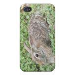 Conejo de conejo de rabo blanco iPhone 4 cárcasas