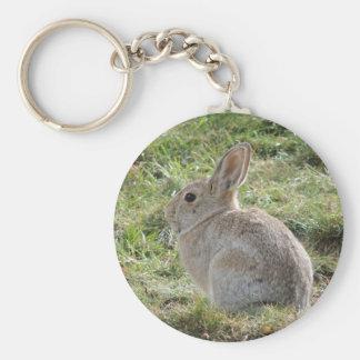 Conejo de conejo de rabo blanco llavero redondo tipo pin