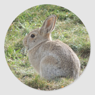 Conejo de conejo de rabo blanco pegatina redonda