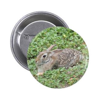 Conejo de conejo de rabo blanco pin