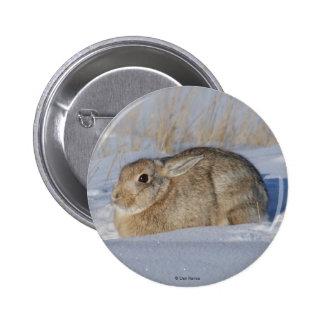 Conejo de conejo de rabo blanco R0005 en botón de  Pin Redondo De 2 Pulgadas