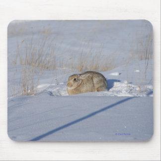 Conejo de conejo de rabo blanco R0005 en nieve Tapetes De Ratones