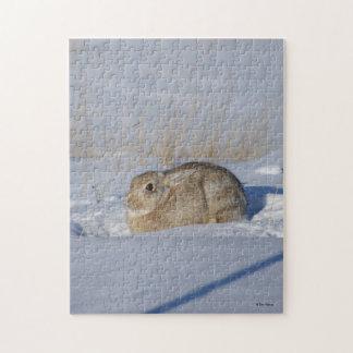 Conejo de conejo de rabo blanco R0005 Rompecabeza