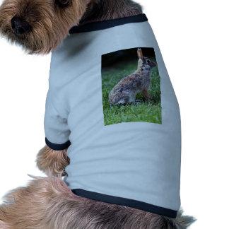 Conejo de conejo de rabo blanco prenda mascota