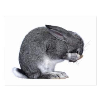 Conejo de desesperación tarjetas postales