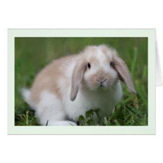 Conejo de Holanda Lop del bebé Tarjeta De Felicitación