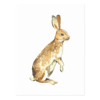 Conejo de la acuarela tarjetas postales