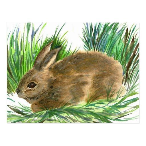 Conejo de rabo blanco de reclinación - acuarela postal
