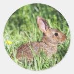 Conejo de rabo blanco del este etiqueta redonda