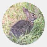 Conejo de rabo blanco del este etiquetas redondas