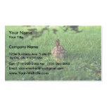 Conejo de rabo blanco del este tarjetas de visita