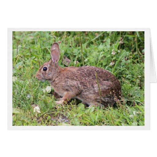 Conejo de rabo blanco del este tarjeton