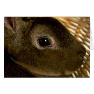 Conejo de Rex del albaricoque Felicitación